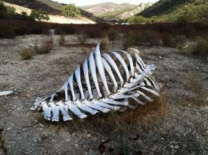 Faunal bones