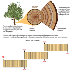 http://www.crowcanyon.org/index.php/dendrochronology